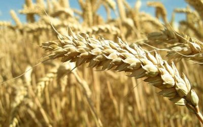 Innovation lifting crop yields